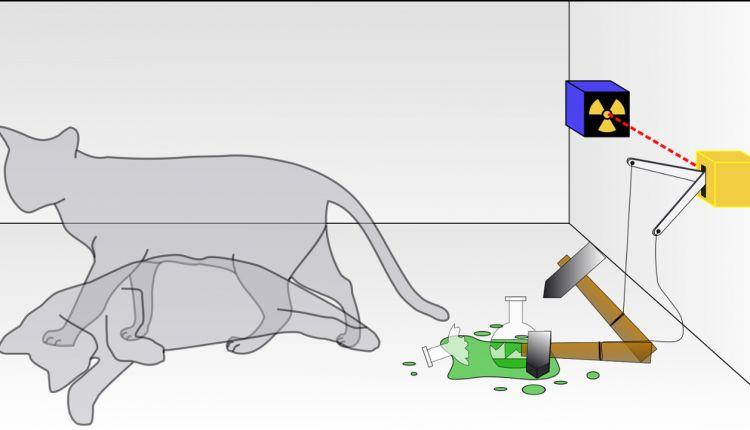 Kot, burmistrz i mechanika kwantowa