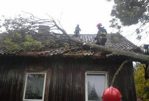 Powiało i połamało drzewa