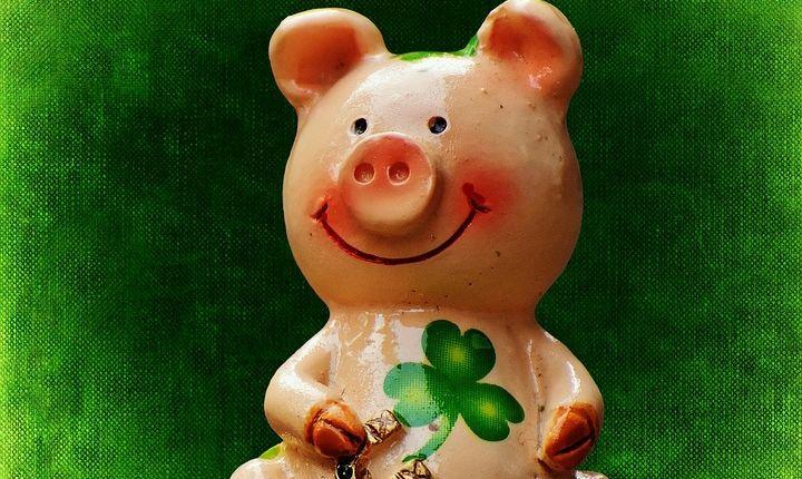 """Będzie dyskusja o """"świnkach z Imionek"""". Izba Rolnicza w Olecku zaprasza"""